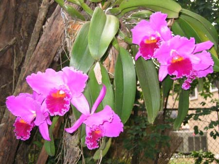 https://www.bluetidecavaliers.com/images/slideshow/orchid.jpg